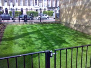 Professional Lawn Care in Colchester