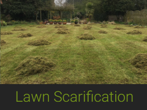 a lawn after scarification process, piles of grass dotted around